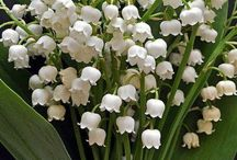 Flowers - Lily of the valley / Everything depicting a lily of the valley