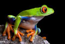 frogg tattoo