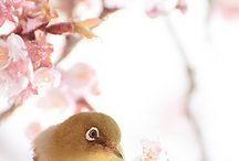 Immagini / Immagini