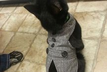 Kitty clothes<3