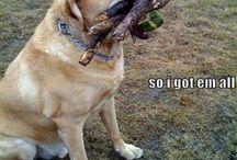 Funny dog memes / Need cheering up? Follow this!