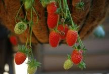 My Job- Garden/ food storage