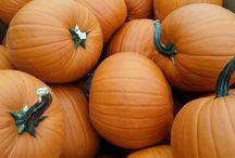 Halloween and Pumpkins - 2014