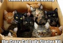 Cat Lady Strikes Again / by Megan M