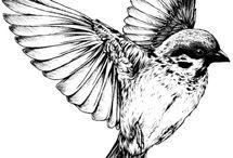 Créa oiseau