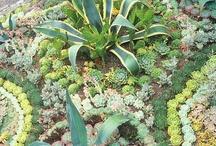 vetplant tuin