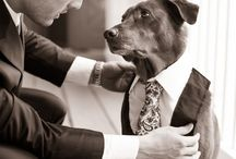 Man's Best Friend / Ideas for how to invole man's best friend in your Big Day...
