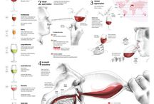 Wine Tasting / Useful cheat sheets for wine tasting