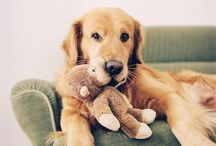 Animals and Their Stuffed Animals