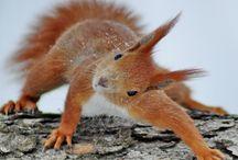 Mimiques d'écureuils