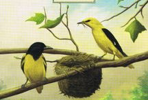 12 Ptaki