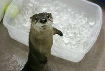 Good otters