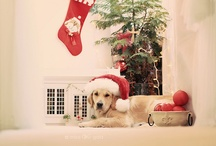 Christmas / by Katie Grossnickle