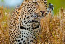Animales Naturaleza