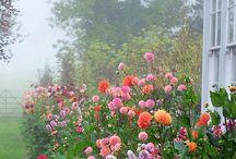 Puutarhoja/Istutuksia Pinterest