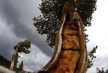 Awsome Trees