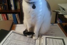 GENCAT: May they forever control the office / Genealogy wouldn't be the same without our #gencat