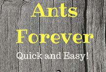 ants how to get rid of them for good