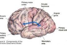 Apraxia Awareness and Information