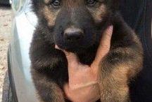 dog breeds/ dogs