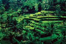 Wellness Trip To Ubud / Bali,Ubud, this beautiful little place in Bali cannot be your destination if you want to enjoy the beach sun or a wild and crazy party. Ubud is all about the lush green surroundings, rejuvenating spas, wellness yoga, monkeys of all temper and sudden showers.