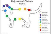 chakra animali