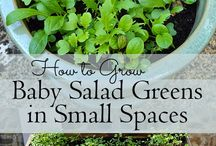 Green Thumbs / All things gardening.