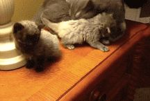 śmieszne i słodkie kotki