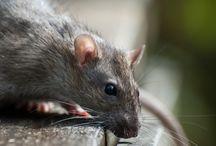 Pest Control Ealing & chiswick