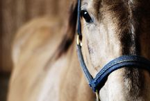 horse stuff / by Kay Humble