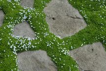 English Landscapes / Landscaping ideas inspired by English styled gardens.