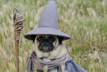 Wizard Dogs