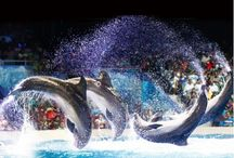 Dolphin and Seal Show at Dubai Dolphinarium! / Dubai Dolphinarium is an amazing place, where you are guaranteed to meet some of the most beautiful animals that inhabit our oceans and have lots of fun with them.