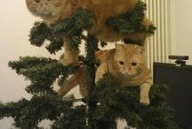 Gatos navideños / Imágenes de gatos navideños