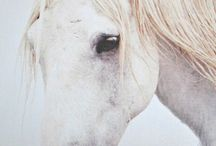 Horse art / by Olga Fettser