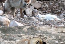 söta djur osv