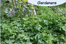 My garden / by Jasmine