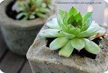 hypertufa/cement pots