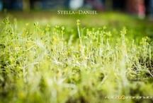 Engagement - Stella ∞ Daniel