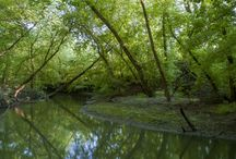 Zagyva river