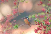passerotto colibrì