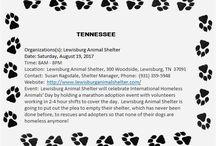 IHAD August 19, 2017 / International Homeless Animals Day 2017