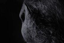 Animals/Zvieratá