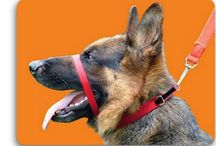 Canny Collar / Some great images of dogs wearing Canny Collars