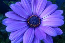 Green and Purple / by Jodi Lynn