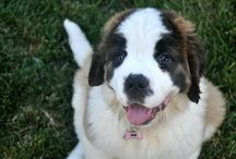 Cats and Dogs / We like puppies and kitties. This is the place to pin cat and dog cute stuff.