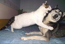 honden/wolven/vossen