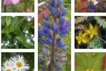 My flower garden / flowers