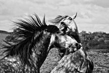 Horses / by Michelle Morais