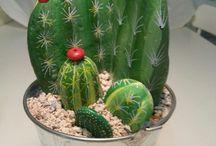 cactus sassi